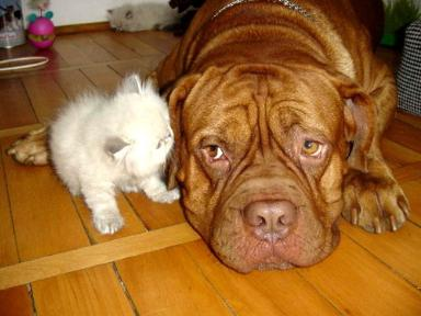 Dog with kitty friend